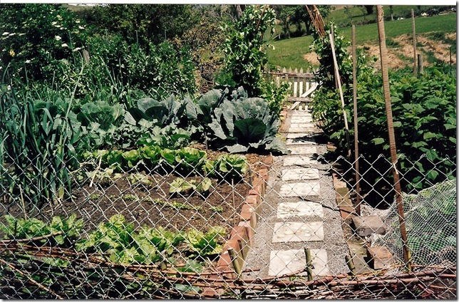 The vegetable gardens
