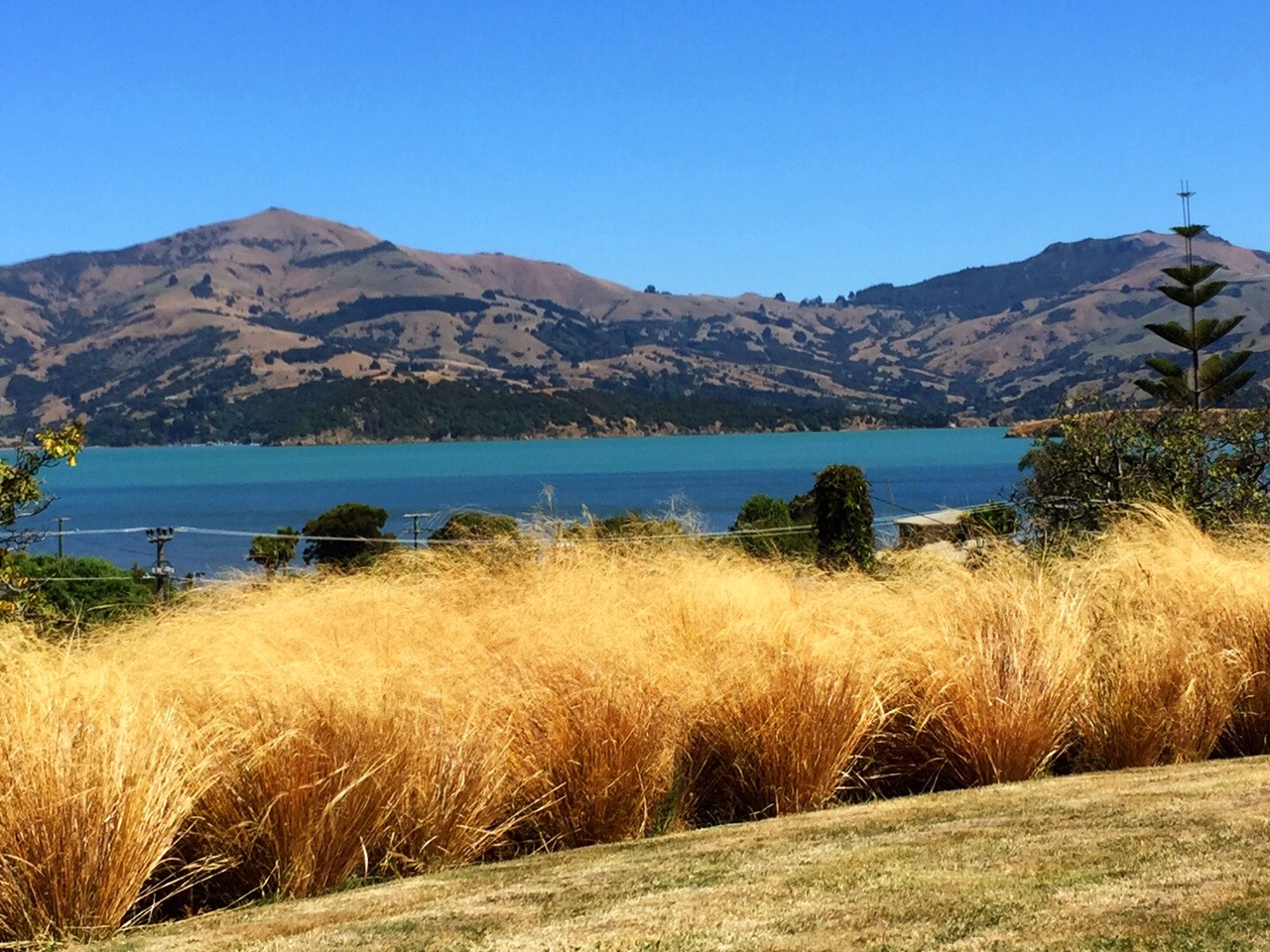 The Harbour through the tussock
