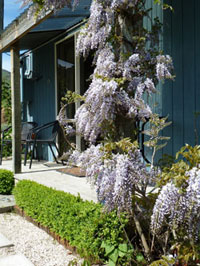 wisteria at L'abri Garden Cottage - self contained akaroa accommodation