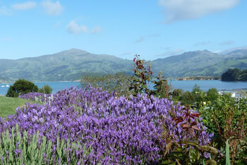 The harbour through the lavendar